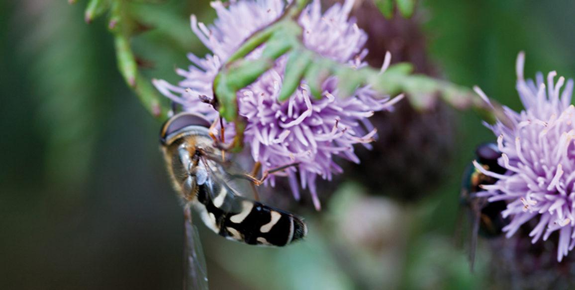 Bee & Wild Flowers